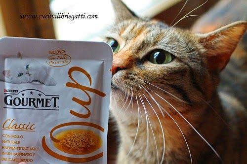 Gourmet soup, i miei gatti scelti come degustatori d'eccezione!