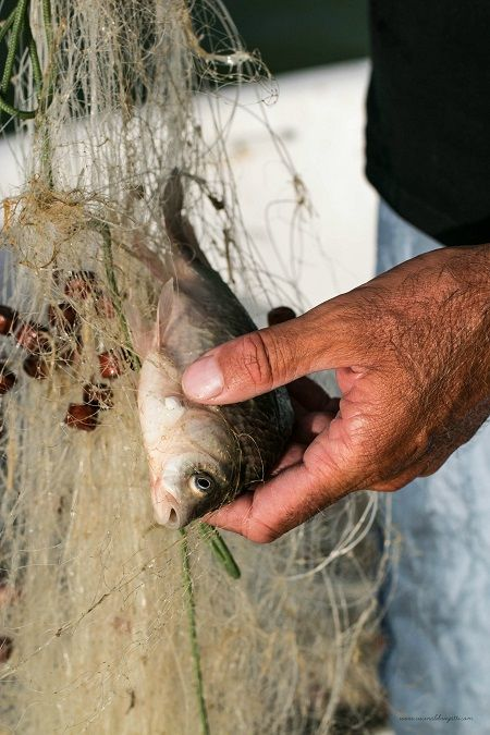 pesca di lago